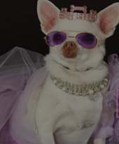 The 14th Annual NY Pet Fashion Show