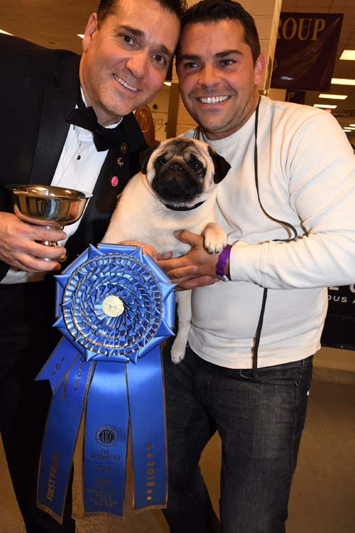Pug At The Westminster Dog Show  Tv