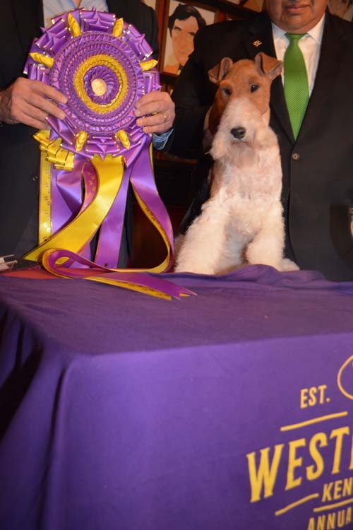 Top Dog King.  Photo by:  Rose Billings/Blacktiemagazine.com